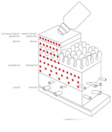 TMT sistēma - elektroporācija + elektroforēze