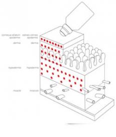 TMT sistēma: elektroporācija + elektroforēze